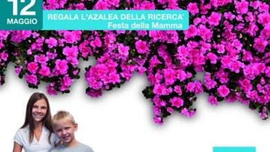 Photo of AIRC – Ricerca: azalea in vendita nelle piazze d'Italia