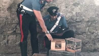 Photo of Napoli – Controlli dei carabinieri: denunciate 10 persone