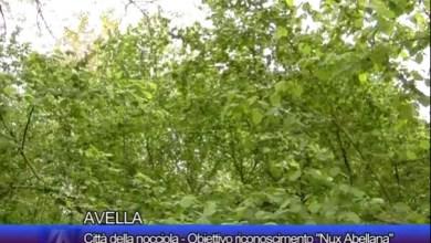 """Photo of Avella – Obiettivo riconoscimento """"Nux Abellana"""""""