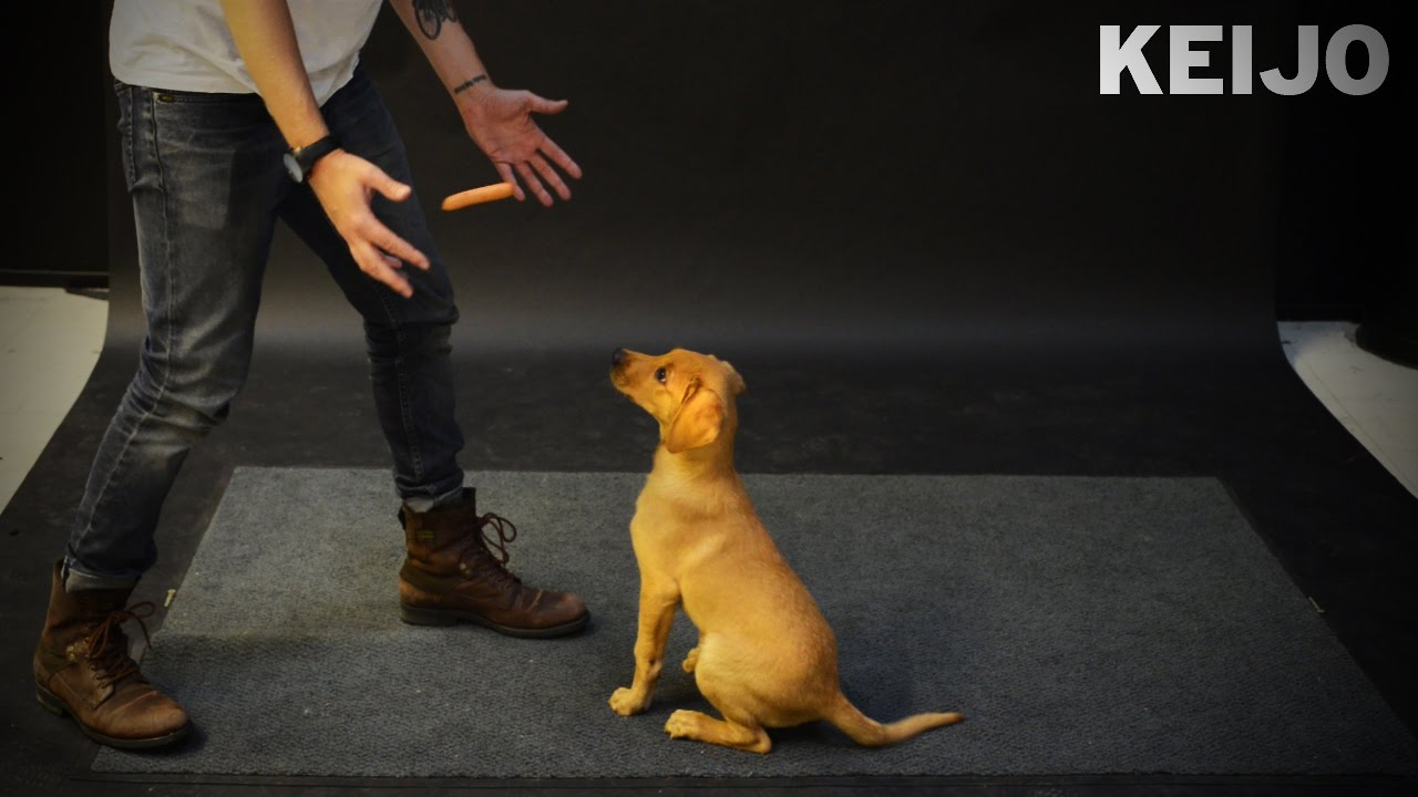 How Dogs React to Levitating Weiner – LOL at :47 secs!!! 😂