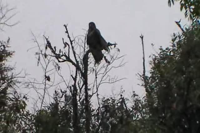 Bird of prey2