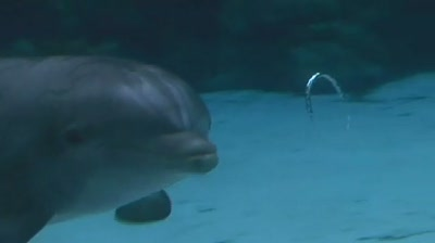 dolphin-blowhole-rings