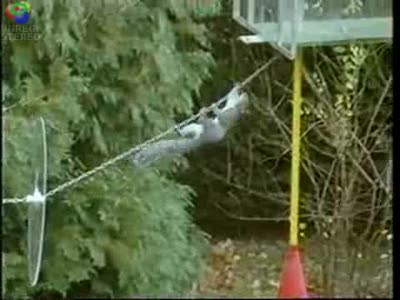 mission-impossible-squirrel
