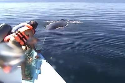 saving-whale-michael-fischbach