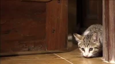 Pet Adoption TV – Clever