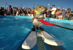 Featured Vid #126 – Twiggy The Waterskiing Squirrel