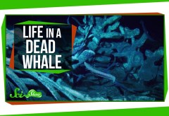 Featured Vid #232 – Life Inside a Dead Whale