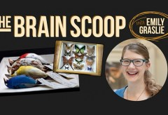 Channel Showcase: The Brain Scoop