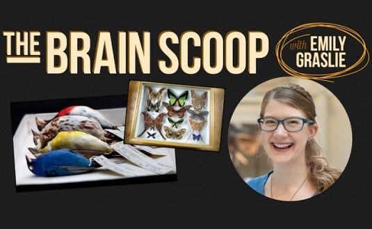 The-Brain-Scoop-Vlogbrothers-Field-Museum-Sale