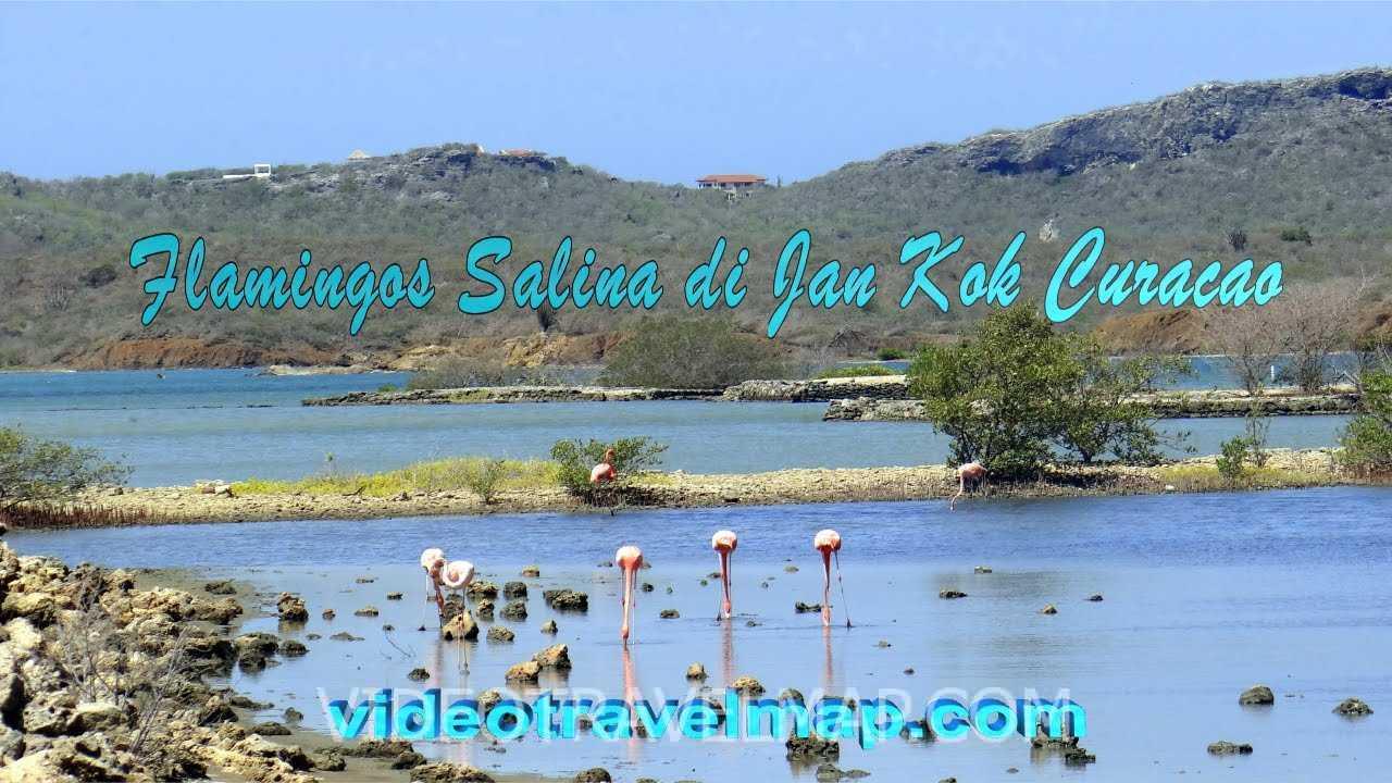 Jezioro Flamingów Jan Kok na Curacao