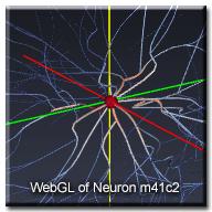 WebGLNeuron_m41c2_wtext