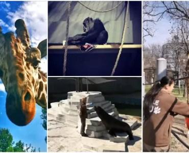 Зоолошка градина