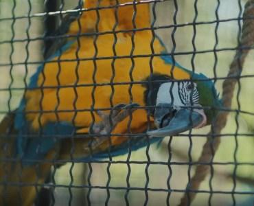 Папагалот Плаза Бејби зоо