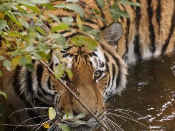 Can Wild Animals Really Sense Fear, VidLyf.com