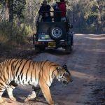 Tiger-Safari-India.jpg