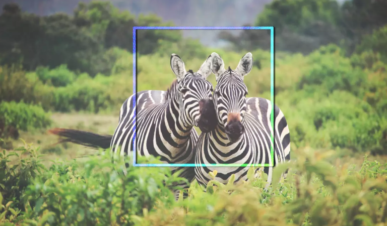 The world's animals are getting their very own Facebook