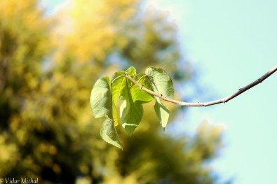 Photograph of hanging leaves