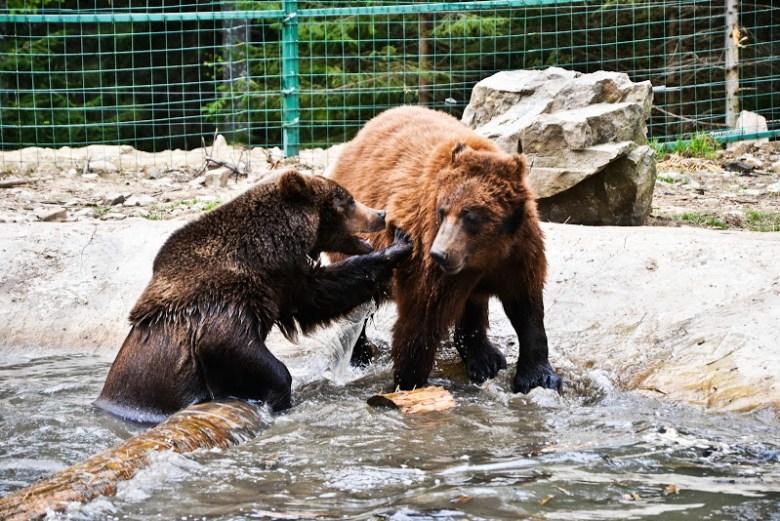 Synevyr bears