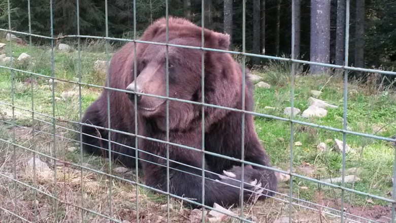 Реабилитационный центр Бурого медведя