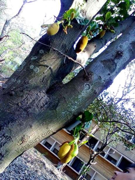 Digital Vacation Jackfruit 3