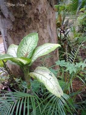 wabi sabi trees