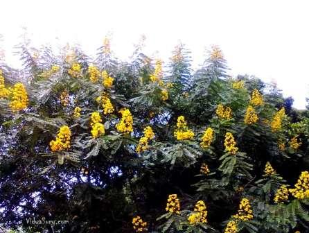 vidya sury happiness tree