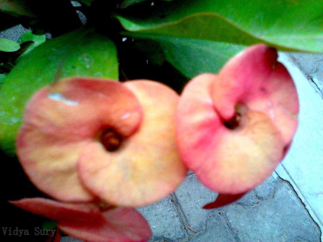 Love endures vidya sury 3
