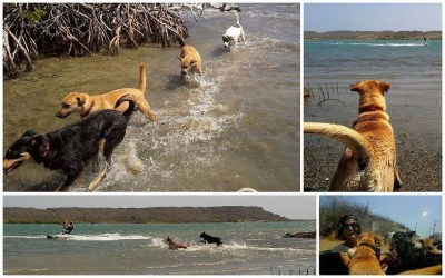 Rescue Guilie