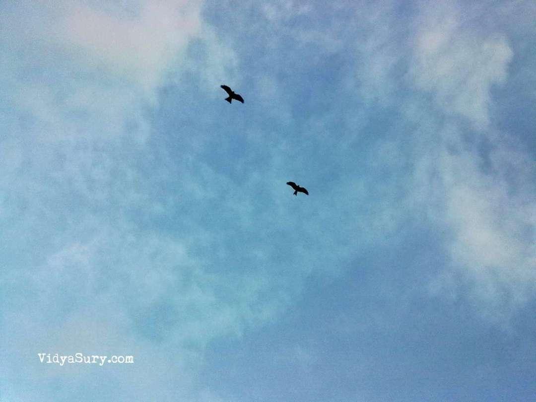 vidya sury a fresh look at life (1)