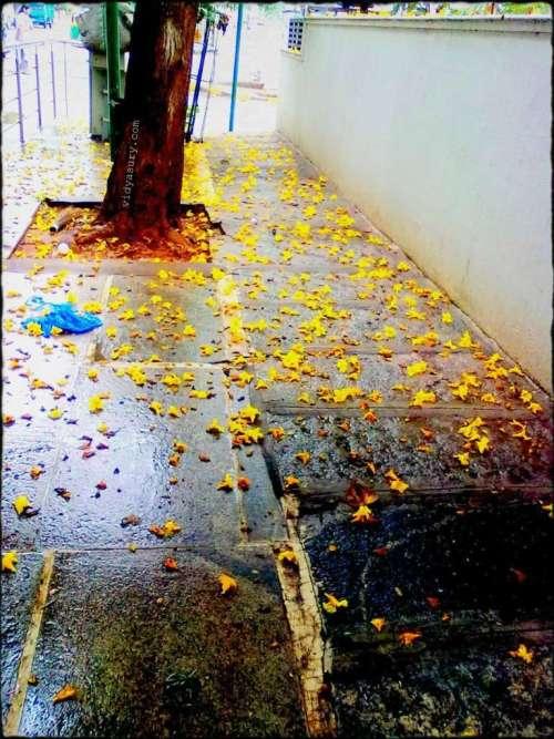 vidya sury change footpath