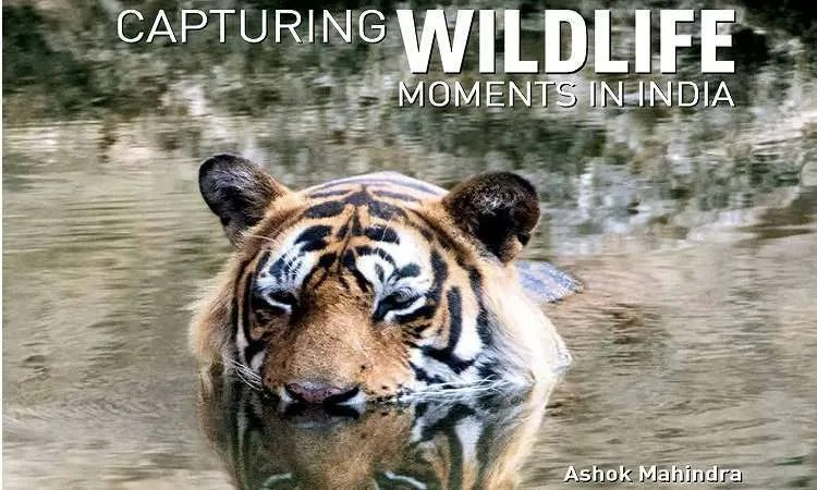 Capturing wildlife moments in india book review