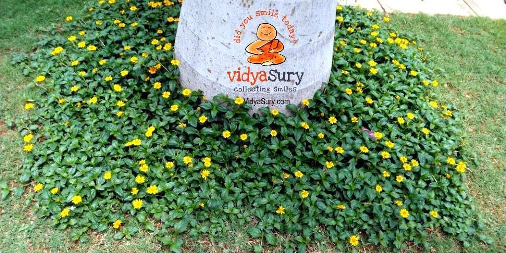 Savoring each moment in gratitude Vidya Sury