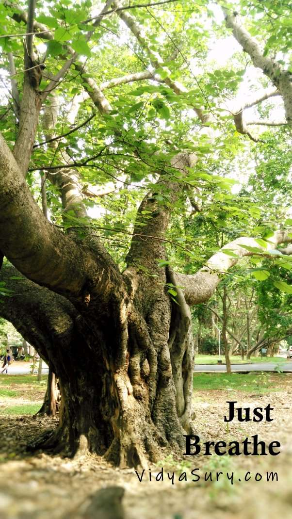 STOP. Just breathe. Hugger Tree. #Trees #Nature #ForestBathing