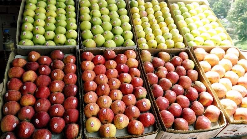 Apples in Chail Himachal Pradesh