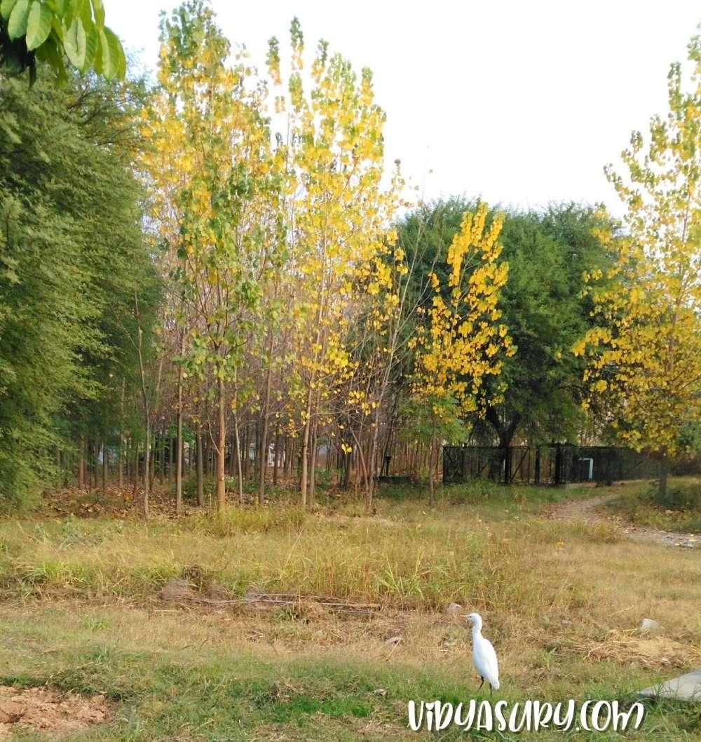 Poplar Trees Crane