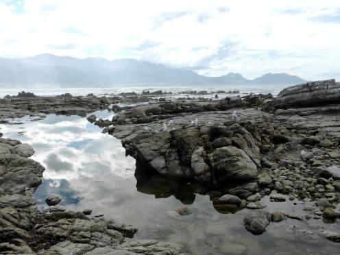 l'île du Sud-Kaikoura (2)