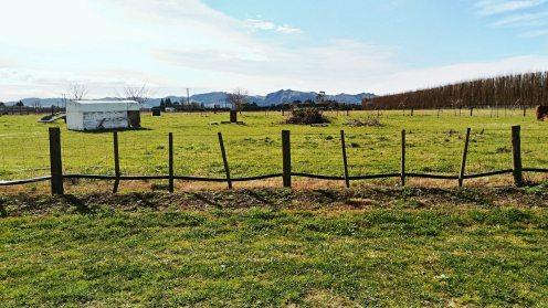 Orchards de kiwi-travailler l'hiver en Nouvelle Zélande (3)