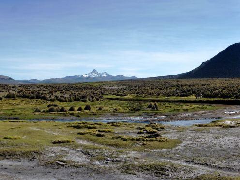 Parc National de Sajama-Bolivie (8)