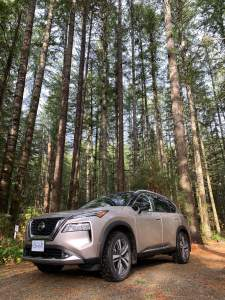 Vancouver Island In The 2021 Nissan Rogue Tall Trees