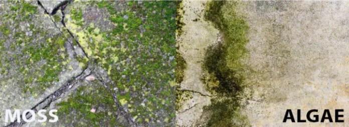 Moos or algae: Roofing issues