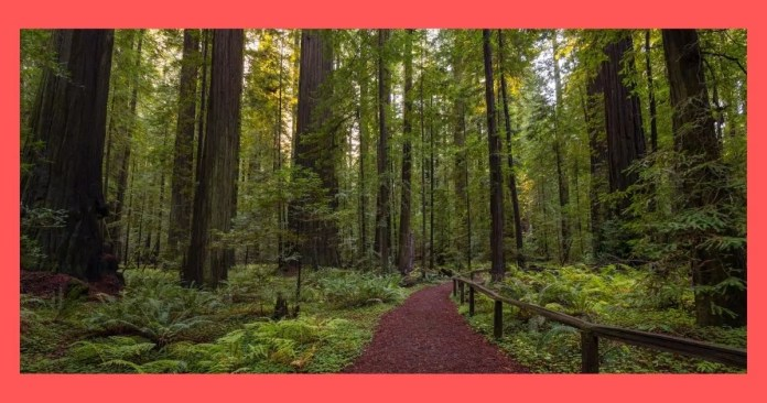 Crescent City Redwoods