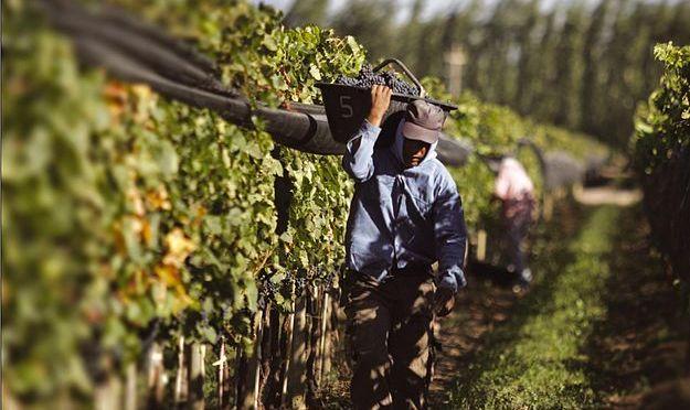 Afin d'embaucher des ouvriers pour sa vigne