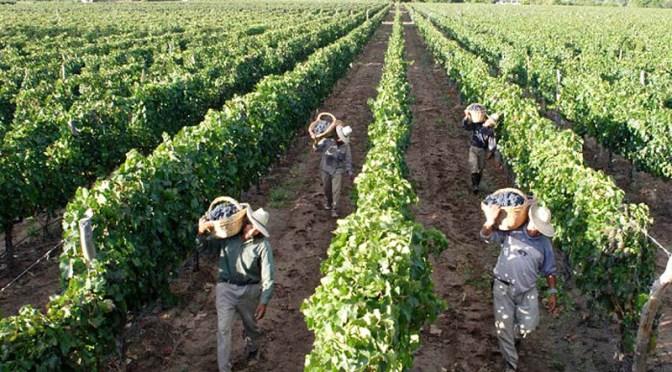 «Mon enfant, va travailler aujourd'hui à la vigne»