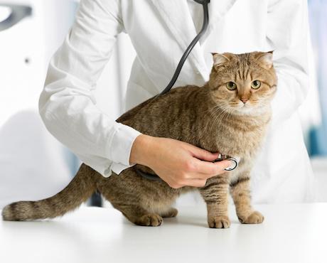Clinique Dr Huart, Dr Boulert, Dr Henau