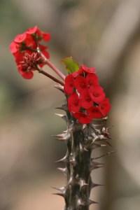 Épines et fleurs