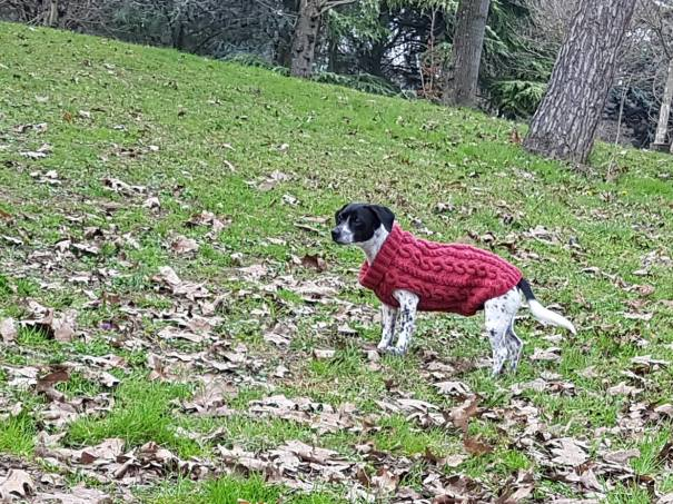 pull-tricot-torsade-chien-dog-knit-drops-bergere-de-france-fileco-vieille-morue-10