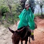 Mulas en el trek a Ciudad Perdida, Colombia