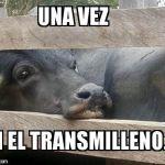 Como ganado en el transmilenio de Bogotá