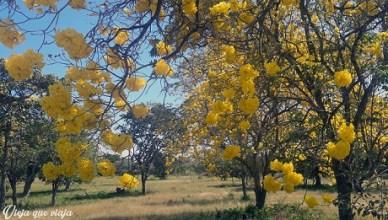 Amarillo en la ruta a Mompox
