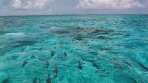 Schnorchel Tour am Belize Barrier Reef 9